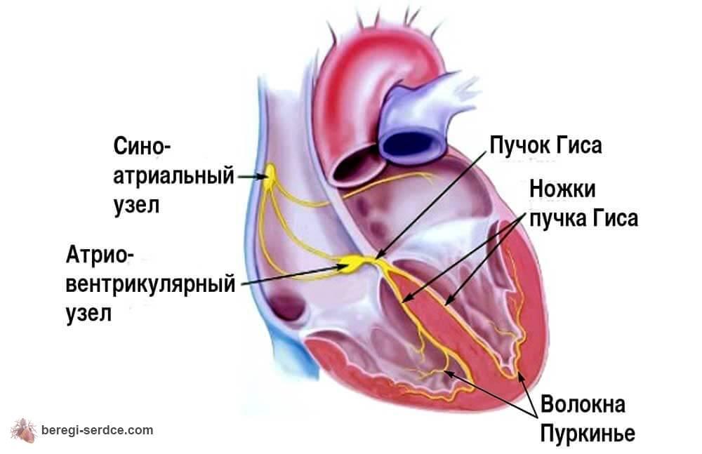 Аритмия сердца что можно выпить